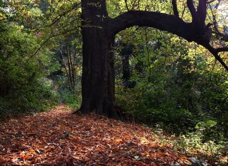 Colwick Wood, Nottingham